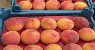 شرکت پخش کننده عمده انواع شانه میوه